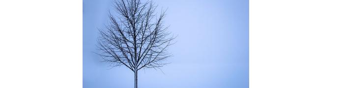 winter blues, denver financial advisor